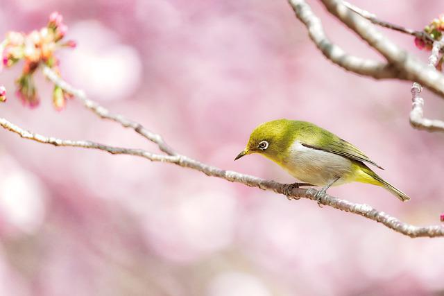 Japanese White-eye, Bird, Branch, Perched, Animal