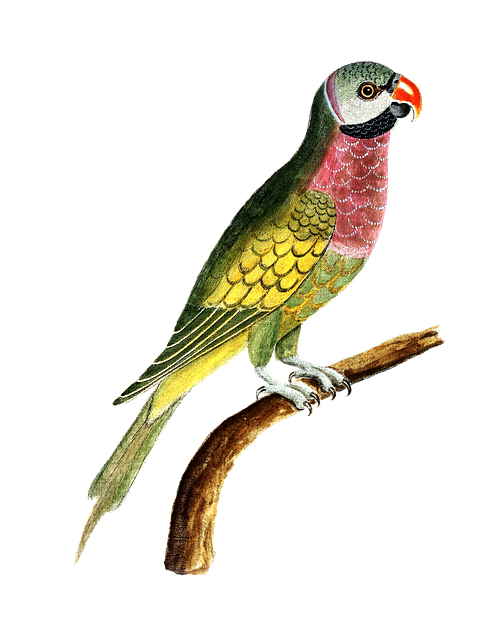 Parrot, Bird, Animal, Colorful, Vintage