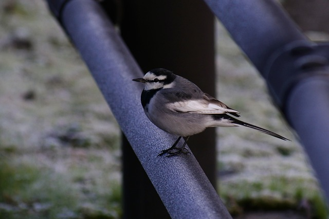 Animal, Morning, Bird, Wild Birds, Little Bird