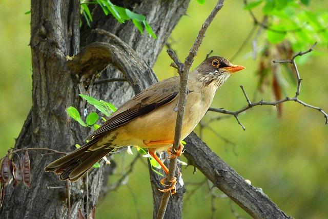 Ave, Bird, Animal, Fauna, Tree, Nature, Feathers, Look