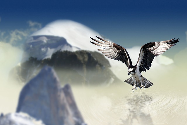 White Tailed Eagle, Bird, Raptor, Bird Of Prey, Animal