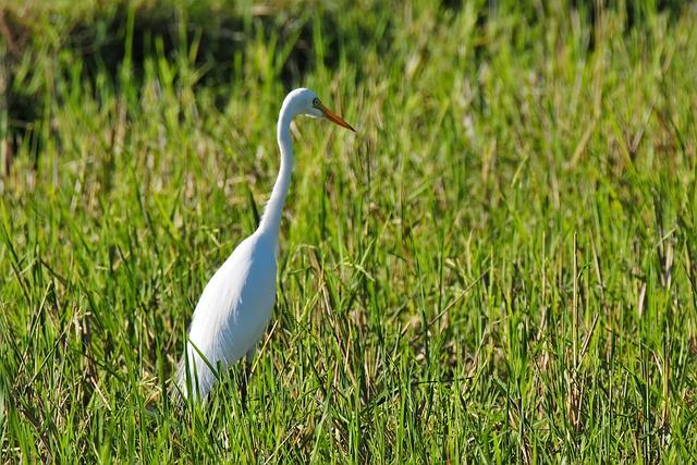 Nature, Outdoors, Grass, Bird, Wildlife, Wild, Animal
