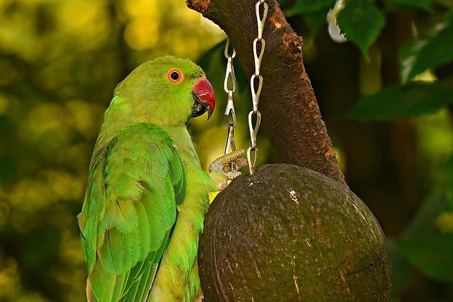 Rose-ringed Parakeet, Bird, Animal, Wildlife, Plumage