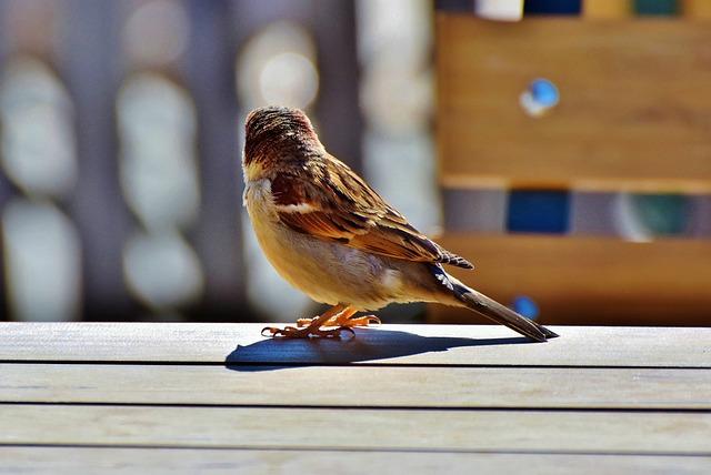 Sparrow, Sperling, Bird, Birdie, Plumage, Animal