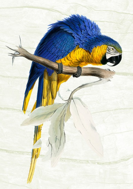 Parrot, Vintage, Colorful, Bird, Animal, Nature, Poster