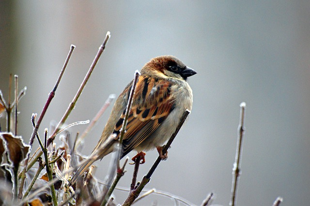 Sparrow, Bird, Animal, Nature