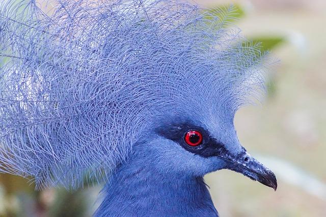 Nature, Bird, Wildlife, Animal, Wild