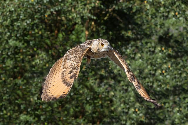 Owl, Prey, Bird, Nature, Wildlife, Animal, Predator