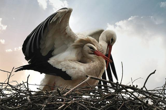 Stork, Bird, Animal, Nature, Mating, Wing, Plumage