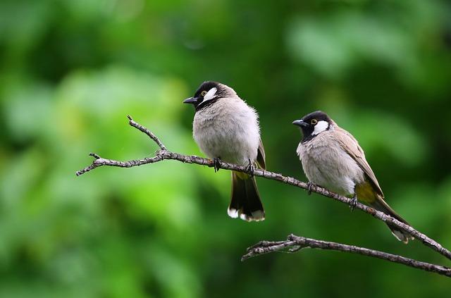 Animal, Birds, Branch, Macro, Perched, Green Birds