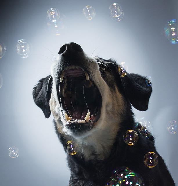 Dog, Bitch, Hybrid, Animal, Pet, Sweet, Portrait