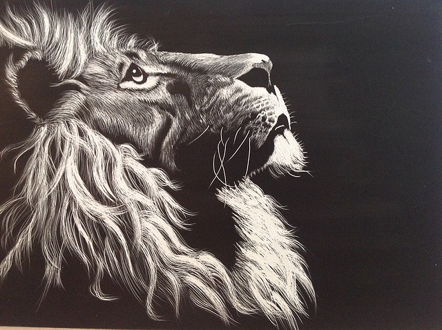 Lion, Black And White, Etching, Head, Animal, Predator