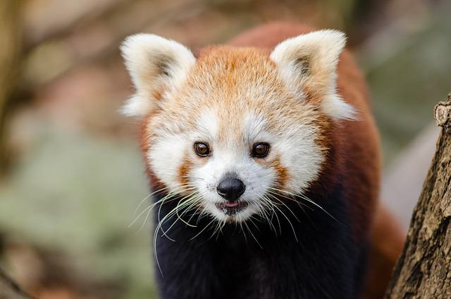 Adorable, Animal, Blur, Close-up, Cute, Endangered