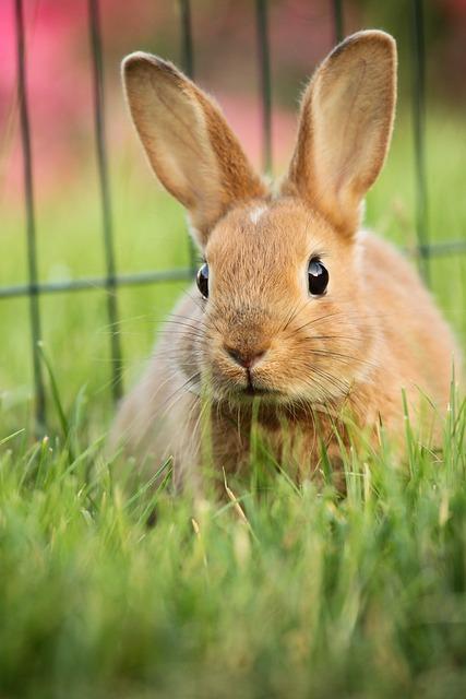 Hare, Animal, Green, Eskers, Rabbit, Ears, Brown, Macro