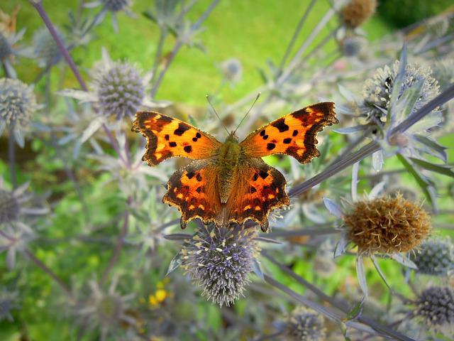Butterfly, Animal, Animals, Insect, Orange, Black