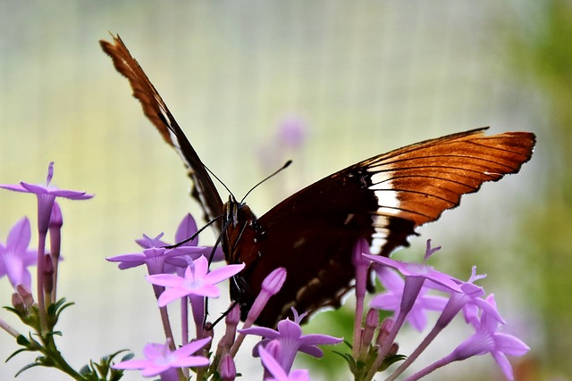 Butterfly, Butterflies, Insect, Flower, Animal, Blossom