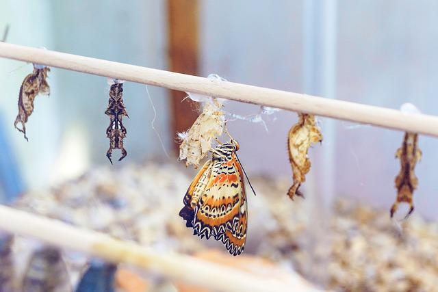 Animal, Animal World, Butterfly, Butterfly Doll, Pupate