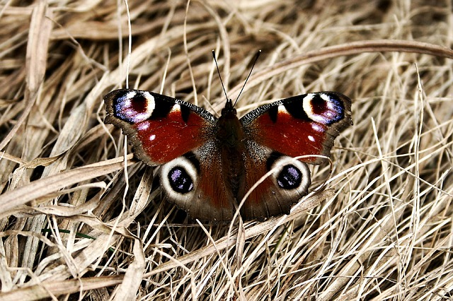 Nature, Butterfly, Animal