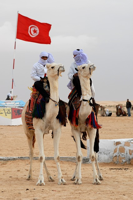 Tunisia, Camel, Animal, Bedouin