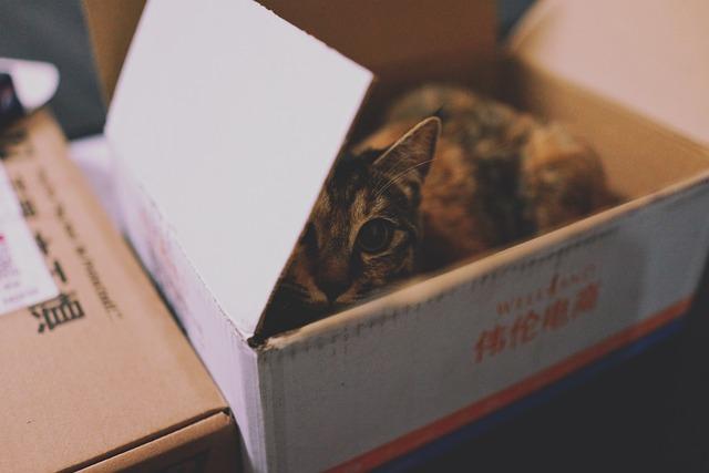 Animal, Cat, Carton