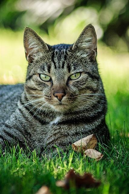 Cat, Gas, Animal, Color, Pets, Cat's Eyes, Cat Face