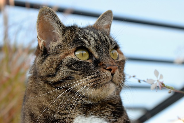 Cat, Animal, Mackerel, Pet, Domestic Cat, Cat's Eyes