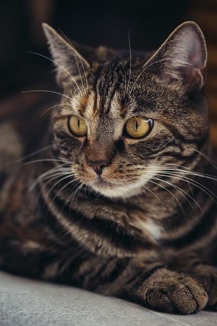 Cat, Domestic Cat, Mackerel, Pet, Animal, Portrait