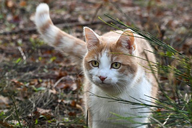 Cat, Nature, Animal, Feline, Field