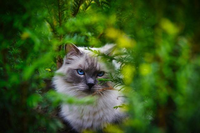 Cat, Garden, Pet, Animal, Feline, Portrait, Kitten