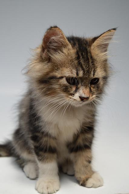Cat, Cute, Animal, Kitten, Mammal