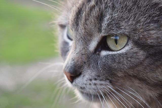 Cat, Views, Cute, Pet, View, Eyes, Animal, Cat Looking