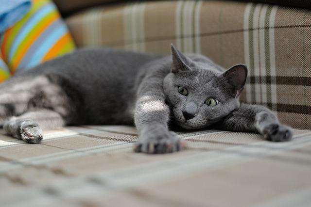 Cat, Animal, Pets, Pet, Housecat, Closeup, Cat Looking
