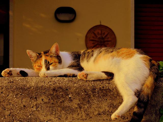 Cat, Sleep, Pretend, Spread, Animal