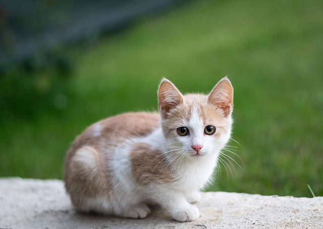 Cute, Animal, Nature, Little, Cat, Pet, Young, Outdoors