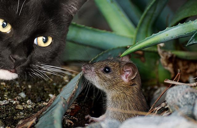 Cat, Mouse, Animal, Cute, Catch, Hunting, Domestic Cat