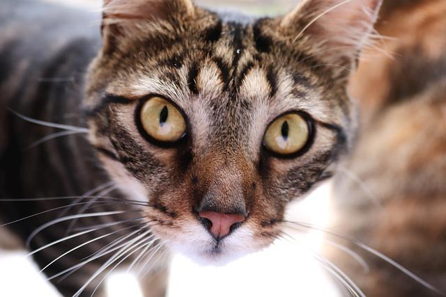 Cat, Face, Animal, Cat's Eyes, Pet, Cute, Portrait