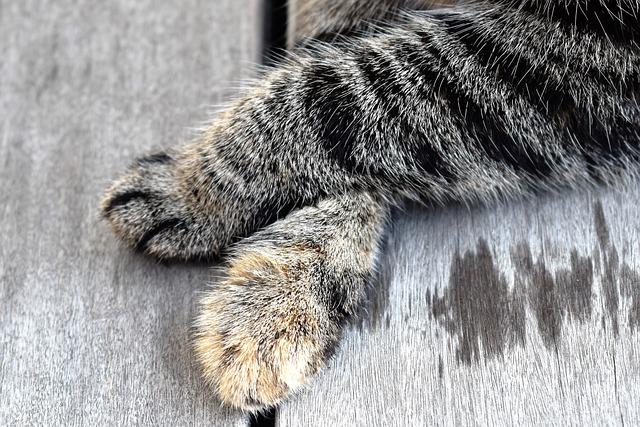 Cat's Paw, Cat, Animal, Fur, Paw Print, Close, Paw, Pet