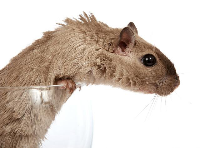 Animal, Attractive, Beautiful, Brown, Close, Concept
