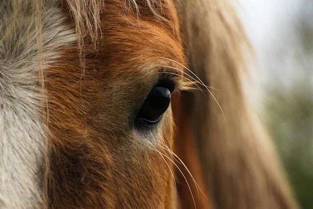 Horse, Eye, Close Up, Head, Animal, Stallion