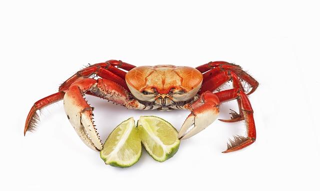 Siri, Crab, Lemon, Animal, White