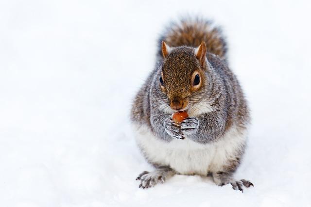 Animal, Brown, Cold, Creature, Cute, Eat, Fur, Grey