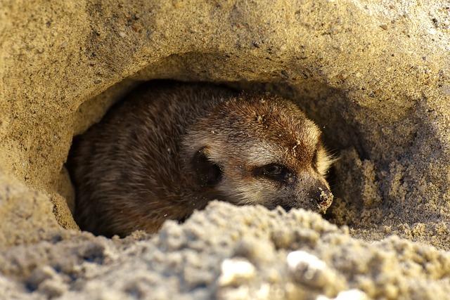 Meerkat, Cute, Curious, Animal, Nature, Mammal