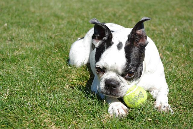 Grass, Cute, Animal, Dog, Mammal, Relax, Ball