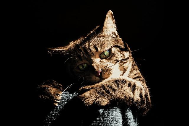 Cat, Play, Pet, Animal, Cute, Playing, Tabby, Focus