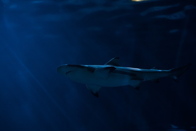 Animal, Blue Water, Dangerous, Deep, Fish, Marine Life