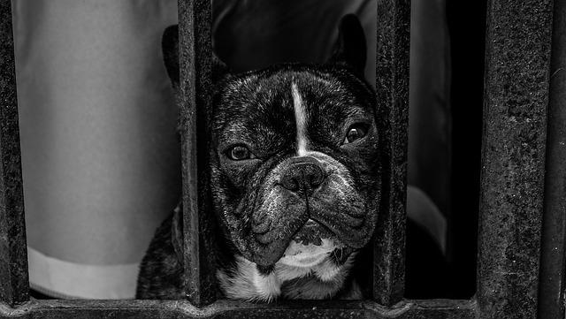 Animal, Animal Photography, Bulldog, Dog, Pet
