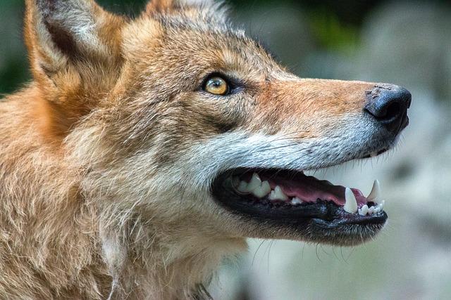 Mammal, Nature, Animal World, Animal, Dog, Wolf