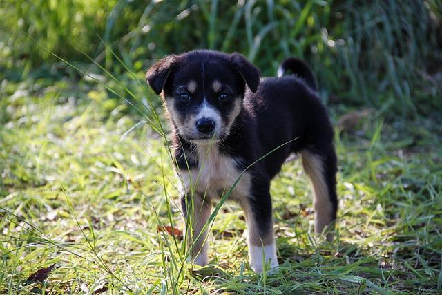 Dog, Puppies, Puppy, Baby Animal, Animal, Animals