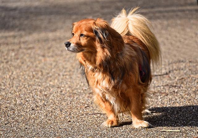 Dog, Animal, Mammal, Canine, Little Dog