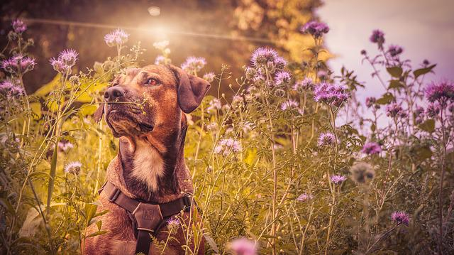 Dog, Pet, Animal, Hybrid, Animal Portrait, Medium